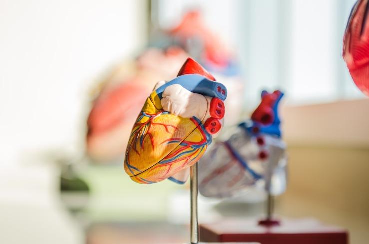 heart-2607178_1280